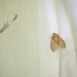 The Voice of the Sibyl, detail of moth at rest in enclosure. 2014